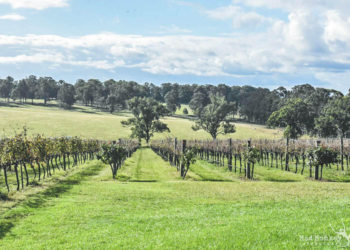 hunter-valley-product-image